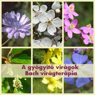Bach virágterápia a kineziológiában – Gyógyító virágok